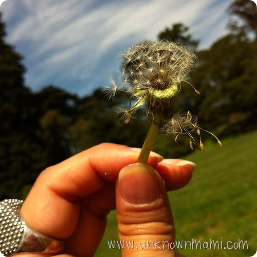 Dandelion-wishes