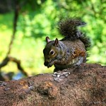 City_squirrel