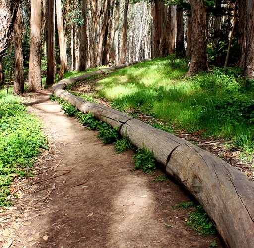 Wood Line by Andy Goldsworthy in the Presidio (Sundays In My City)