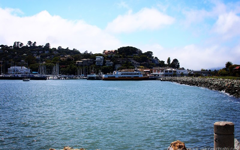 Tiburon (Sundays In My City)