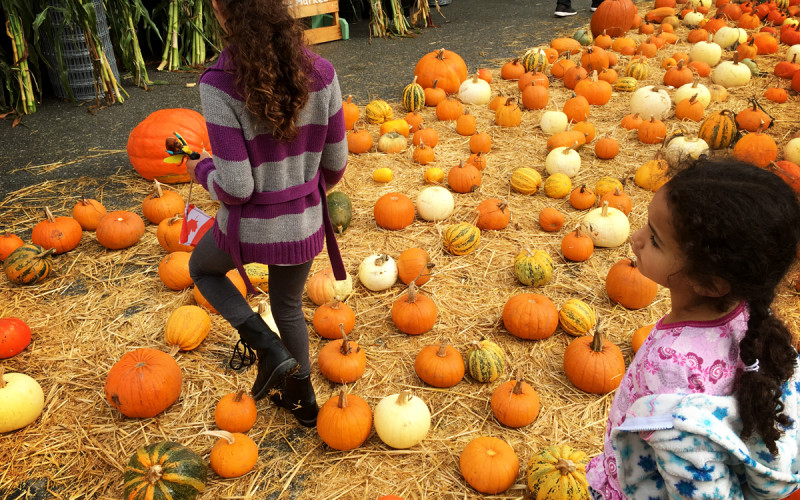 Half Moon Bay Pumpkin Festival (Sundays In My City)
