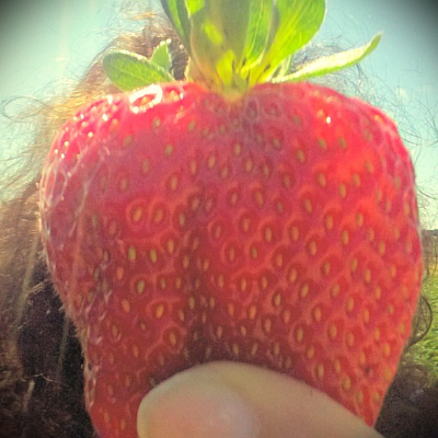 I've got strawberry on the brain!