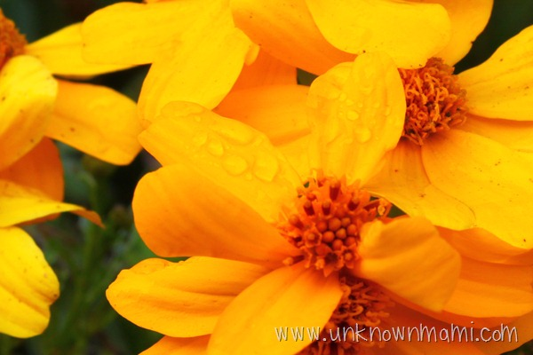 Morning dew on flower