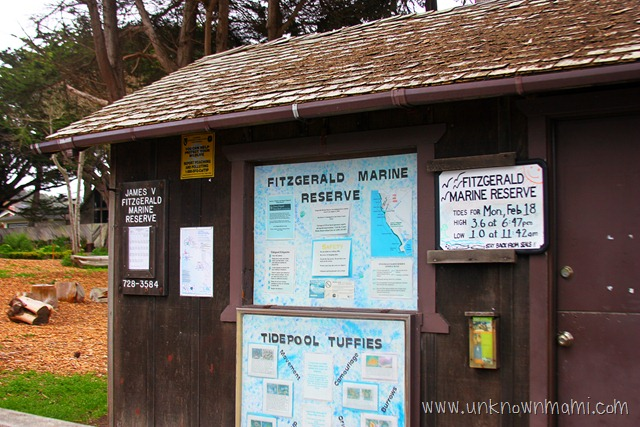 Fitzgerald Marine Reserve (Sundays In My City)