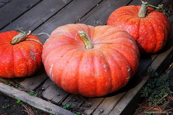 Pumpkins #SafeConBritaxFallFun