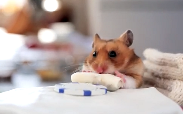 WATCH: This Hamster Eating Tiny Burritos is FREAKIN' Hilarious!!!
